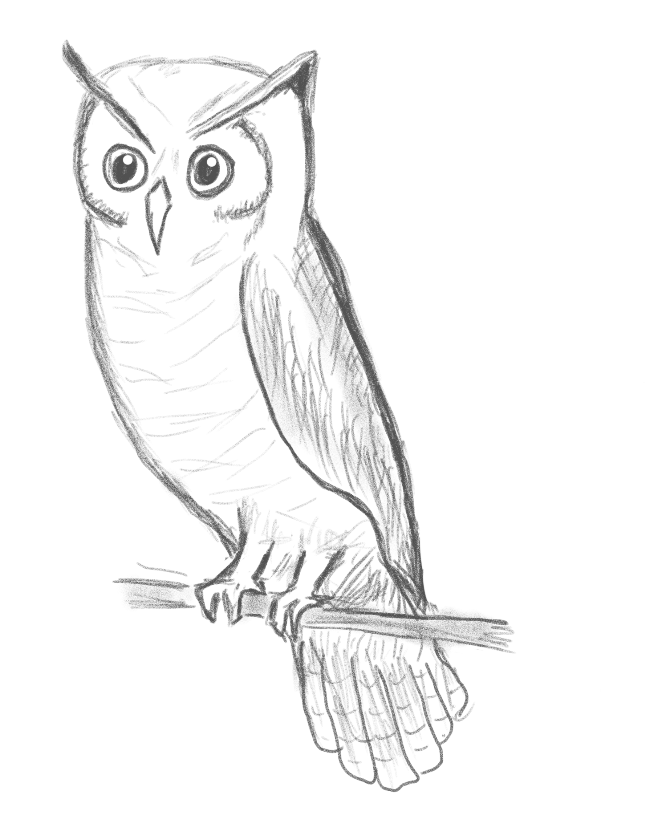 Sketch of an owl perched on a tree